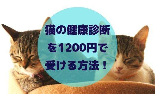 EPARKペットライフで猫の検診が安くなる!1200円or3000円キャンペーン中