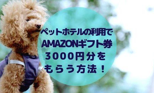 【3000円】ペットホテルの予約でAmazonギフト券がもらえるキャンペーン中!【EPARKペットライフ】